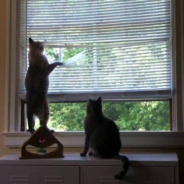 Choosing Pet-Friendly Window Coverings