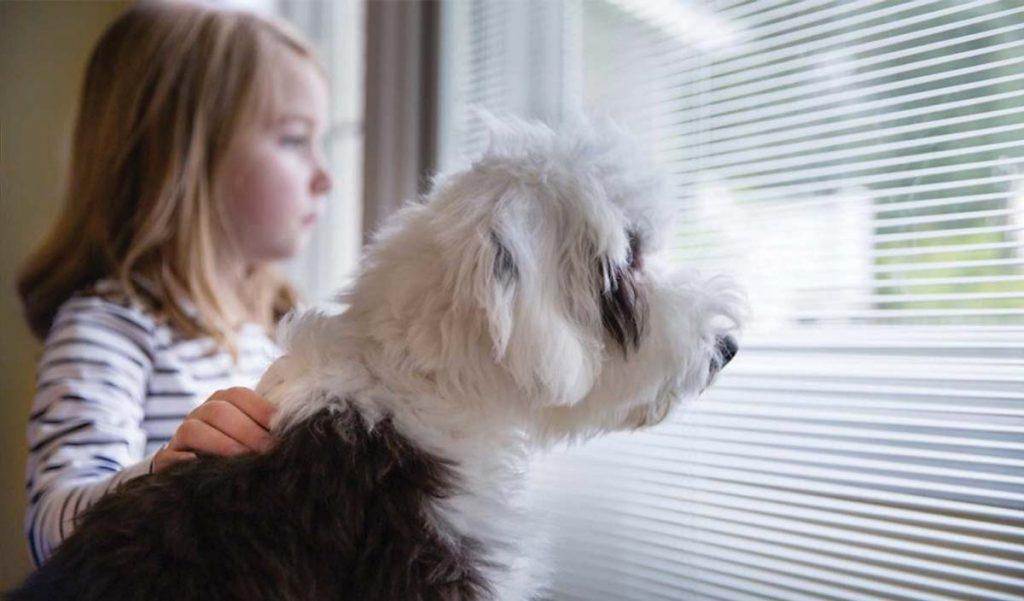 pet friendly window coverings